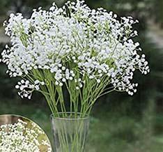گل تززینی جیپسوفیلیا داخل گلدان