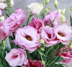 دسته گل لیسیانتوس صورتی