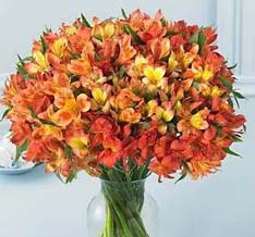 دسته بزرگ آلستر داخل گلدان