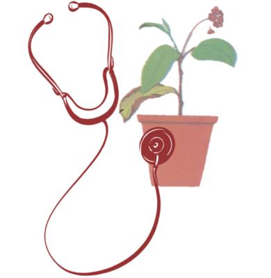 مشکلات در گیاه