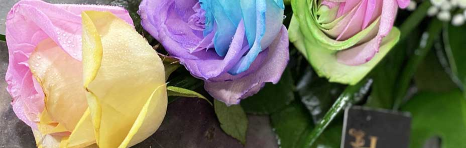 گل رز پاستیلی