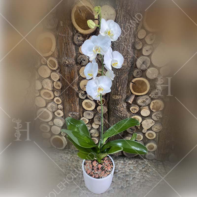گلدان-ارکیده-طبیعی-00