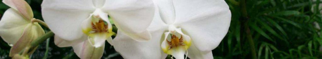 Orchids-goleholland-Blog-Banner-1