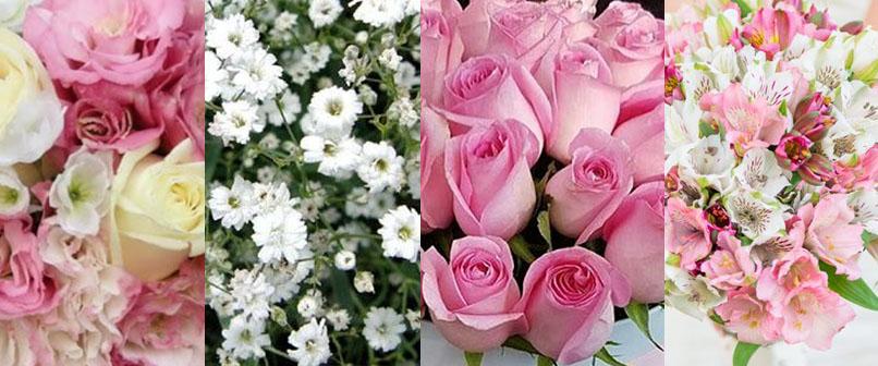 گل های باکس گل رویال