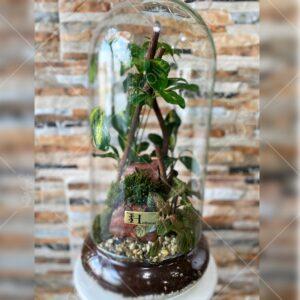 تراریوم-شیشه-ای-فیتونیا-01