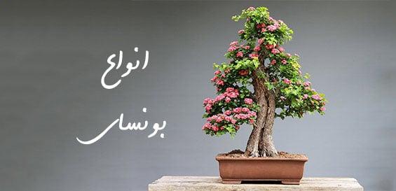 عکس-مخصوص-سایت-گلدان-بونسای