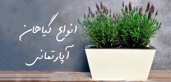 عکس-مخصوص-سایت-گلدان-طبیعی-1