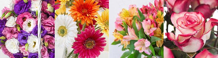 گل های باکس گل چوبی آلستر HAPPY