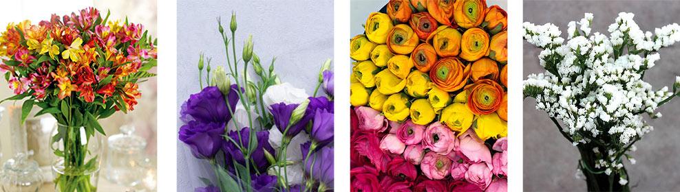 گل های باکس گل عروسک